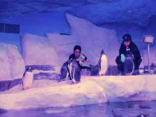 Interacting with penguin